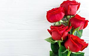 Картинки Крупным планом Роза Шаблон поздравительной открытки