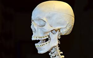 Фото Крупным планом Черепа Черный фон Зубы Голова