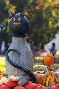 Обои Оригинальные Германия Кошки Тыква Ludwigsburg Pumpkin Festival