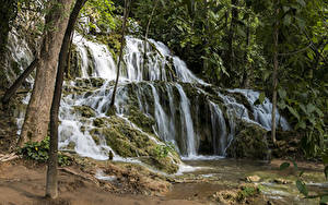 Картинки Хорватия Парк Водопады Утес Мха Дерево Krka National Park Природа