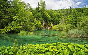 Картинки Хорватия Парки Водопады Озеро Лес Plitvice Lakes National Park