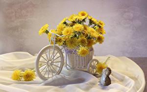 Обои Одуванчики Ежи Велосипеды Корзинка цветок