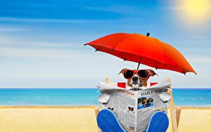 Картинка Собаки Пляж Джек-рассел-терьер Очки Зонт Газета Животные