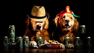 Обои Собака Черный фон Две Ретривер Шляпе Забавные Животные
