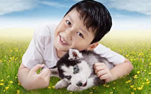 Фото Собака Мальчик Смотрит Щенки Хаски Животные
