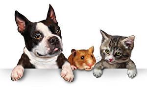 Фото Собаки Коты Морские свинки Белый фон Втроем Щенок Котята Бульдог Лапы Животные