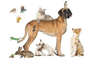 Фотография Собака Коты Кролики Лягушки Попугаи Мыши Белом фоне Аусси Немецкий дог Ящерица