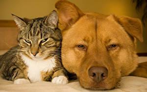 Фото Собака Кот Вдвоем Морда животное