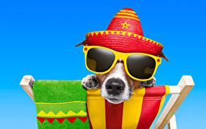 Фотография Собака Цветной фон Джек-рассел-терьер Очков Шляпа Морды Смешной животное