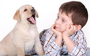 Фотографии Собака Золотистый ретривер Белом фоне Мальчик Щенки Язык (анатомия) Руки Животные
