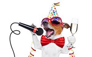 Обои Собака Праздники Бабочки Микрофон Джек-рассел-терьер Очки Бокал Забавные Белым фоном животное