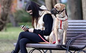 Обои для рабочего стола Собаки Маски Коронавирус Скамья 2 Брюнеток Сидит животное