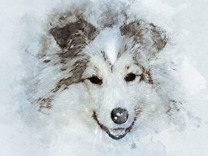 Фото Собаки Рисованные Морда Смотрит Шелти шетландская овчарка