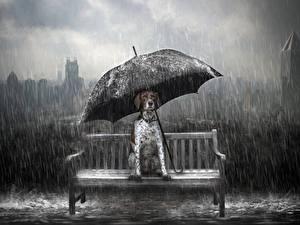 Фотография Собаки Дождь Зонт Сидящие Животные