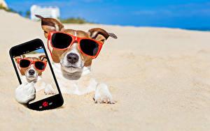 Фотографии Собака Песок Джек-рассел-терьер Очки Смартфоны Селфи Смешные