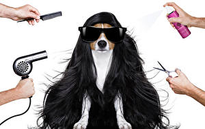 Картинки Собаки Белый фон Волосы Очки Джек-рассел-терьер Руки Фен