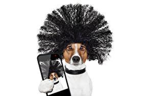 Картинка Собака Белый фон Джек-рассел-терьер Смешной Волос Сматфоном Селфи Прически Животные