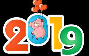 Фотография Домашняя свинья Черный фон 2019 Воздушный шарик Сердечко