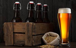 Картинка Напитки Пиво Стакана Бутылки Зерно Еда