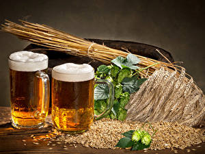 Обои Напиток Пиво Пшеница Кружка Двое Колосок Зерна Пена Еда