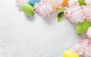 Фотографии Пасха На ветке Яйца Шаблон поздравительной открытки