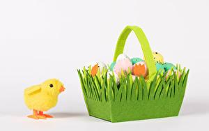 Фотографии Пасха Птенец курицы Белым фоном Корзины Яйцами Продукты питания Животные