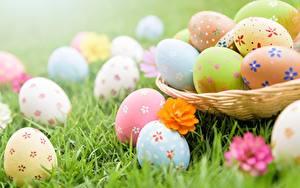 Картинка Пасха Крупным планом Яйца Трава