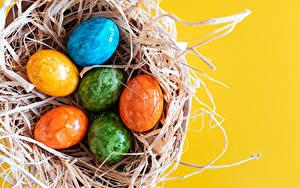 Картинка Пасха Цветной фон Гнезда Яйцо Разноцветные Пища