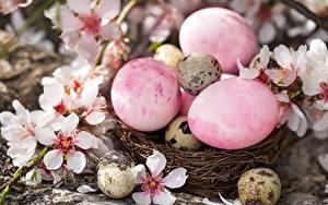 Картинки Пасха Яиц Гнезда Цветы