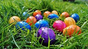 Фотография Пасха Трава Яйца Разноцветные