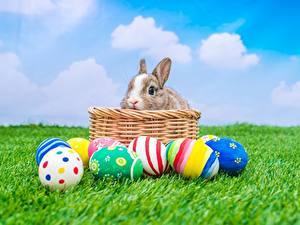 Фотографии Пасха Кролики Яйцо Траве Корзинка животное