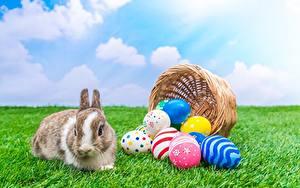 Фото Пасха Кролики Яйцо Корзинка Трава Животные