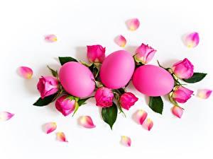 Фотографии Пасха Роза Белом фоне Яйца Розовых