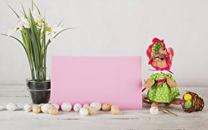 Фотографии Пасха Подснежники Кот Яиц Шаблон поздравительной открытки Лист бумаги Платье Корзина