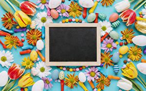 Картинка Пасха Тюльпан Хризантемы Шаблон поздравительной открытки Яйцо цветок