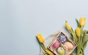 Фото Пасха Тюльпан Сером фоне Желтая Яйцо Шаблон поздравительной открытки цветок Цветы