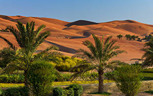 Фото Объединённые Арабские Эмираты Тропики Пустыни Холм Пальм Кустов Abu Dhabi
