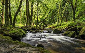 Обои Англия Леса Реки Камень Дерево Мох Cornwall Природа