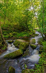 Обои для рабочего стола Англия Лес Камень Деревья Ручеек Мох Peak District Природа