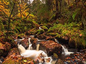 Фотографии Англия Леса Водопады Осенние Камень Листва Мох Sheffield South Yorkshire Природа