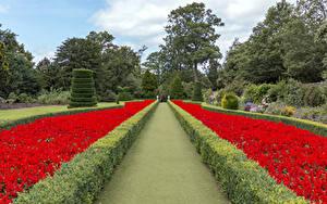 Картинки Англия Сады Дизайна Кустов Дерево Cliveden Garden Природа