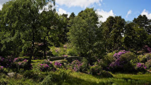 Фотография Англия Сады Деревьев Кустов Трава Cragside House and Gardens Природа