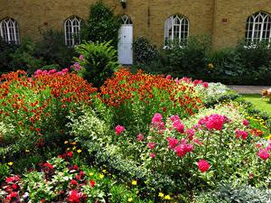 Картинки Англия Сады Левкой Лондон Кусты Chumleigh Gardens Burgess Park Природа