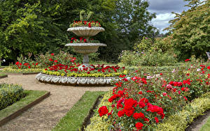 Обои Англия Сады Роза Кустов Дизайна Hughenden Manor Garden Природа