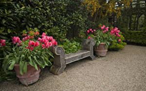 Картинка Англия Сады Тюльпаны Скамейка Arundel Castle Gardens Природа