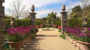 Обои Англия Сады Тюльпаны Фонтаны Кусты Arundel Castle Gardens Природа