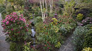 Фотографии Англия Сады Тюльпаны Розы Кусты Walsall Garden Природа