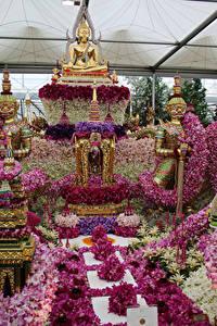 Фотография Англия Орхидеи Парки Лондоне Дизайна Chelsea flower show