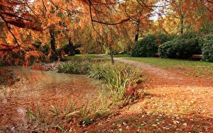 Фотография Англия Парки Осень Пруд Лондон Листва Bushy Park Природа