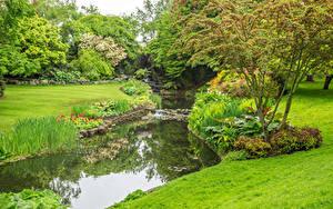 Фотографии Англия Парк Пруд Лондон Деревья Траве Hyde Park Природа